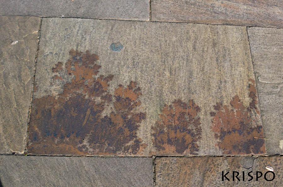 loseta con fosil vegetal
