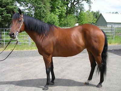 Horse picture  - exnim.com