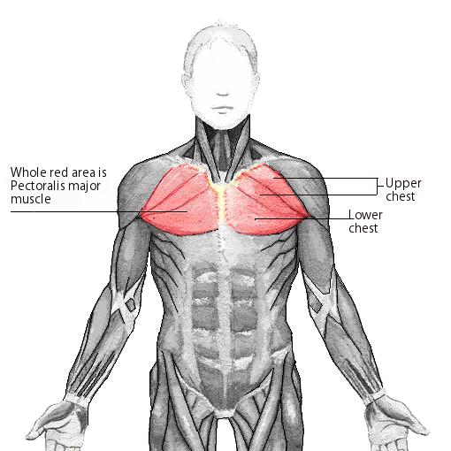 Inner Chest Workout Tips True Fitness