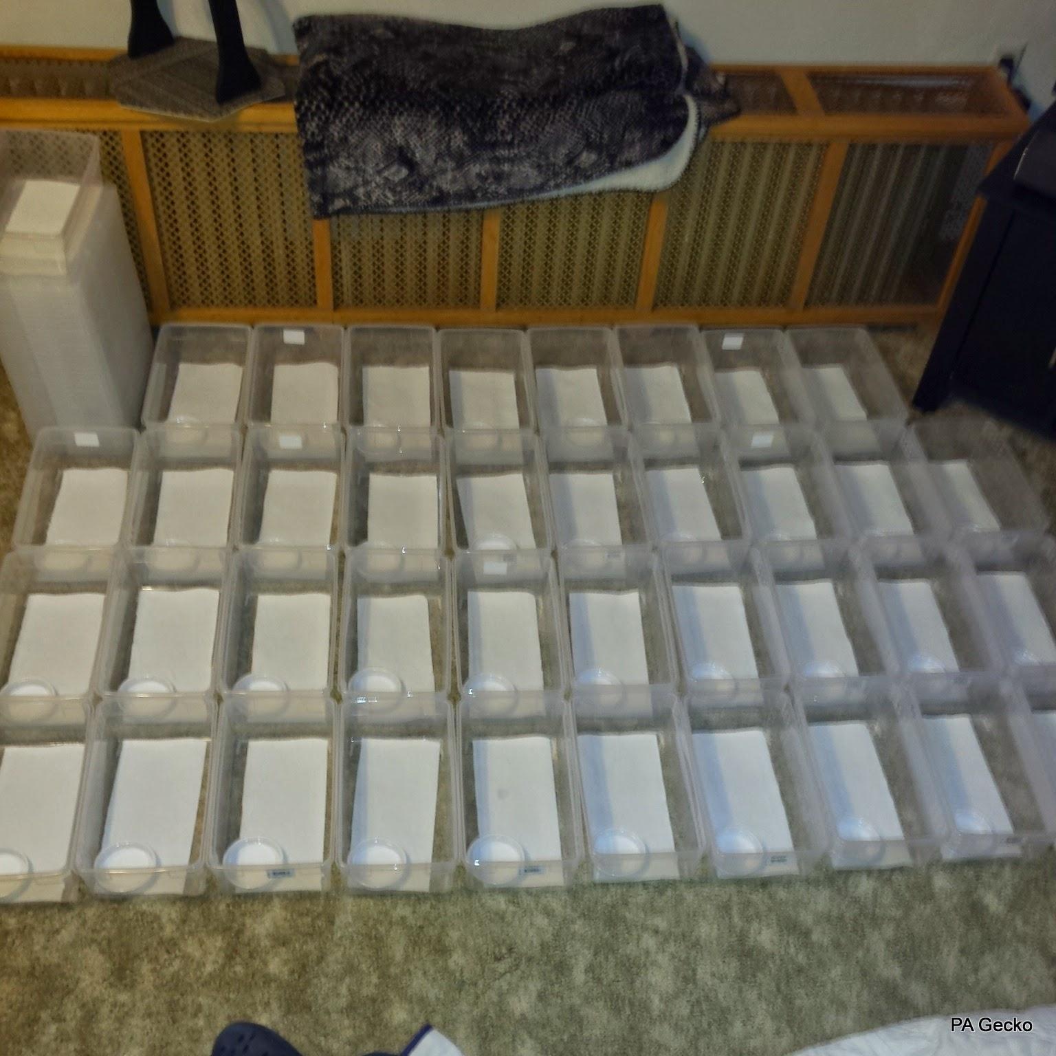 PA Gecko Baby Boxes