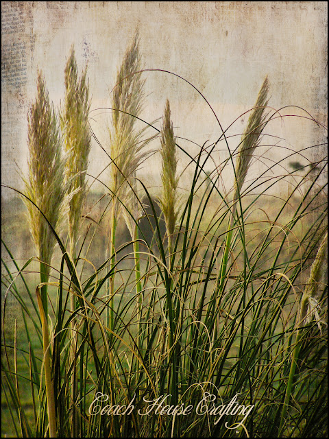 texture tuesday, kim klassens texture tuesday, pampas grass, photo edit