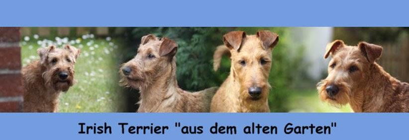 """Irish Terrier """"aus dem alten Garten"""""""