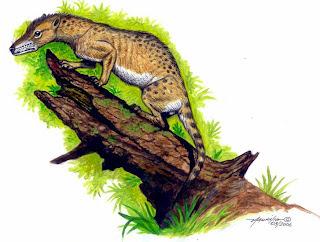 didelphidae fosil Protodidelphis