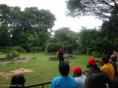 Jurong Bird Park - Kings of the Skies Show Photo 2