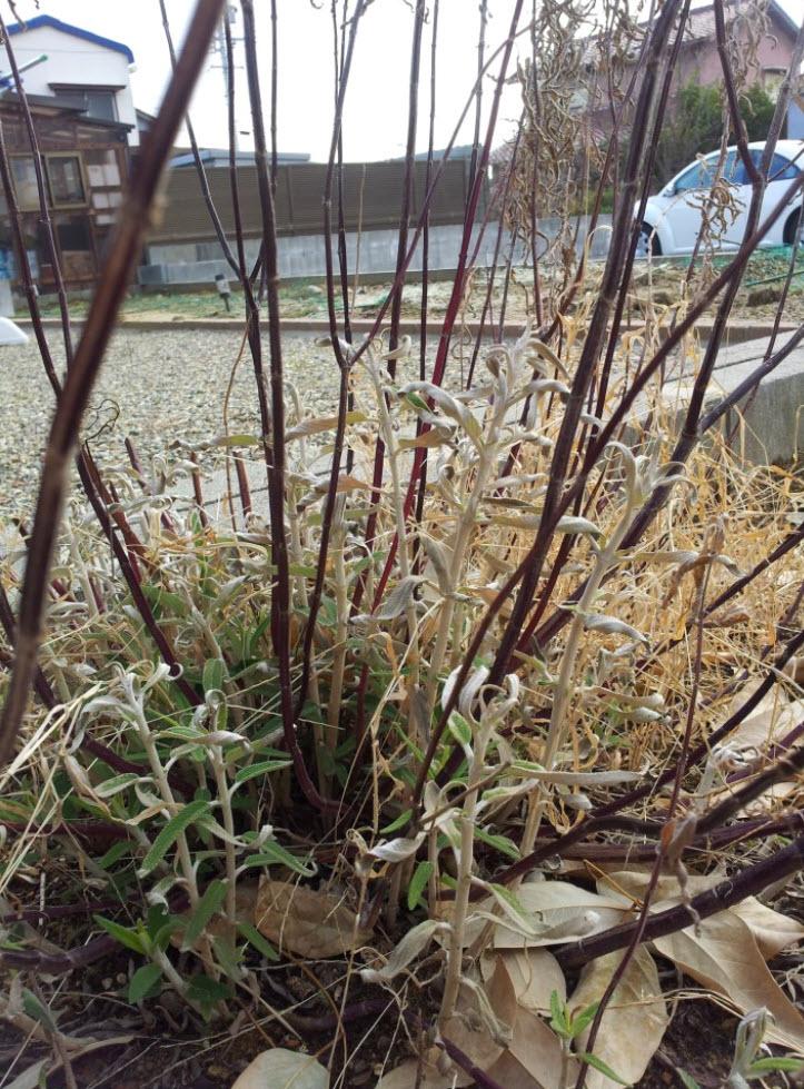 生体エネルギーの家 三重県鈴鹿市 四日市市 津市 地熱活用自然素材の家