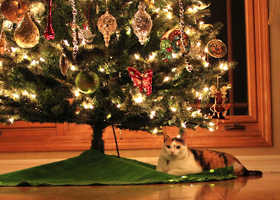 cat under a christmas tree