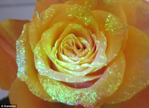 Saintis cipta formula rahsia untuk buat bunga menyala