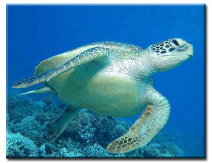Y Wont My Turtle Eat Diving in the Tropics:...