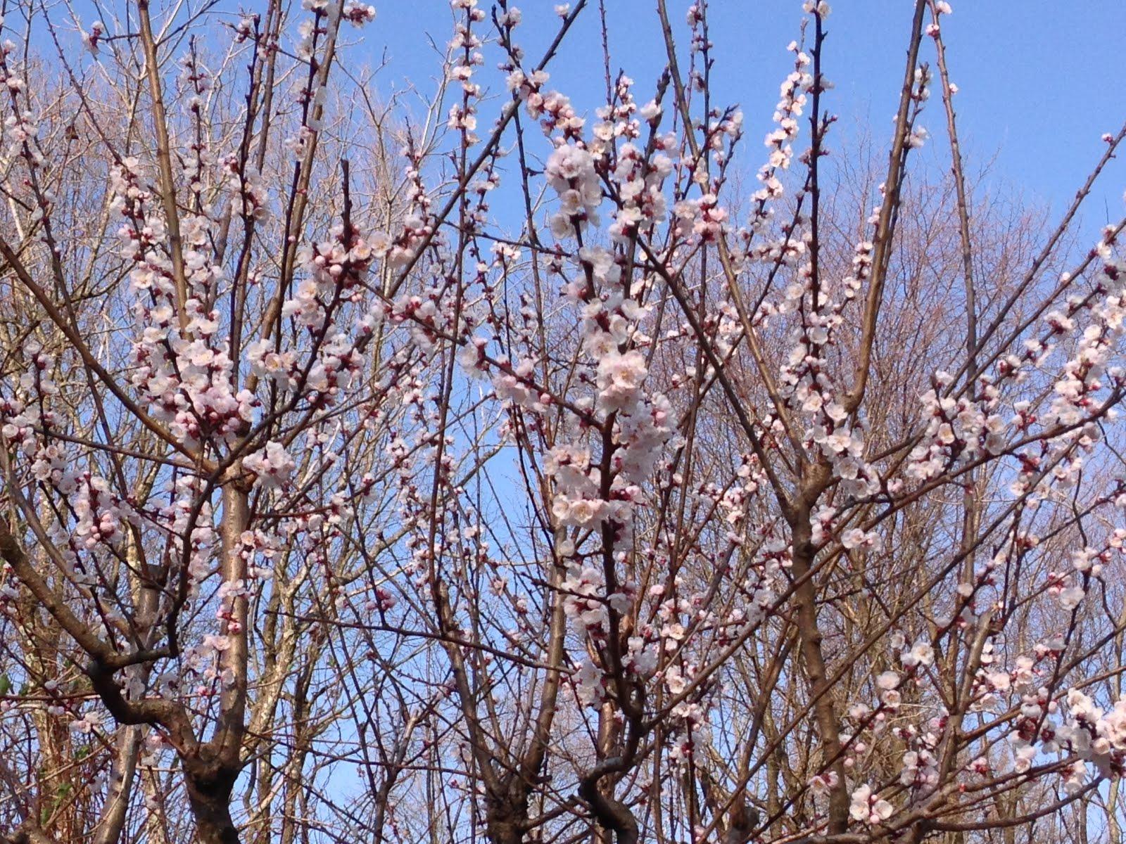 春の足音、、、