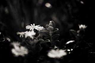 Zen Art Poems