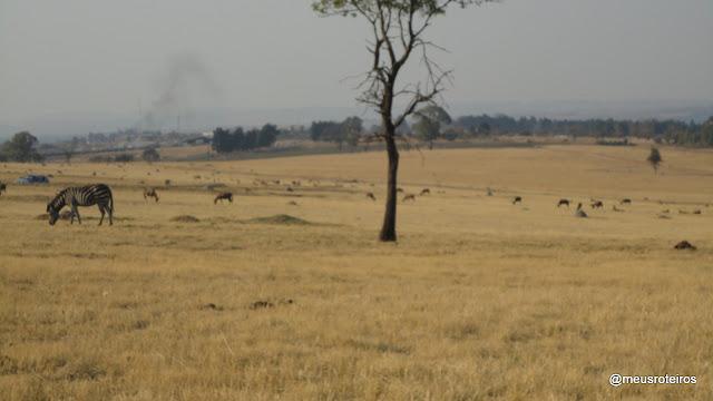 Lion Park - Joanesburgo