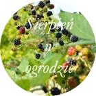 http://brzezinamoja.blogspot.com/2015/09/ogrodowo-sierpniowo.html
