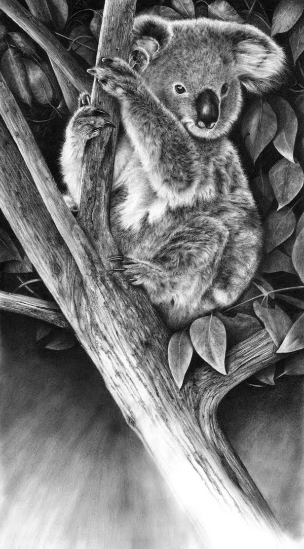 13-Up-a-Gum-Tree-Hyper-Realistic-Wildlife-Peter-Williams-www-designstack-co