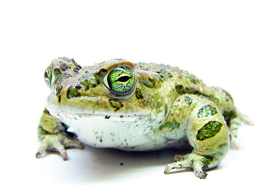 The Mighty Toad Jewelry Designer Blog