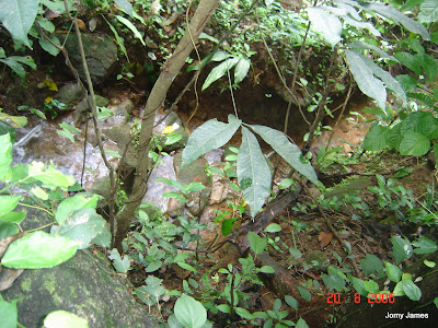 Streams at Velliamattom, Thodupuzha, Idukki