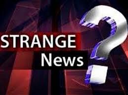 Strange News Headlines