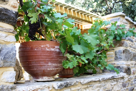 Vines Halki