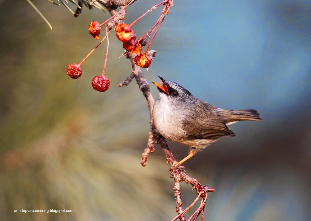 Ảnh động vật: Chú chim xinh đẹp 2 5
