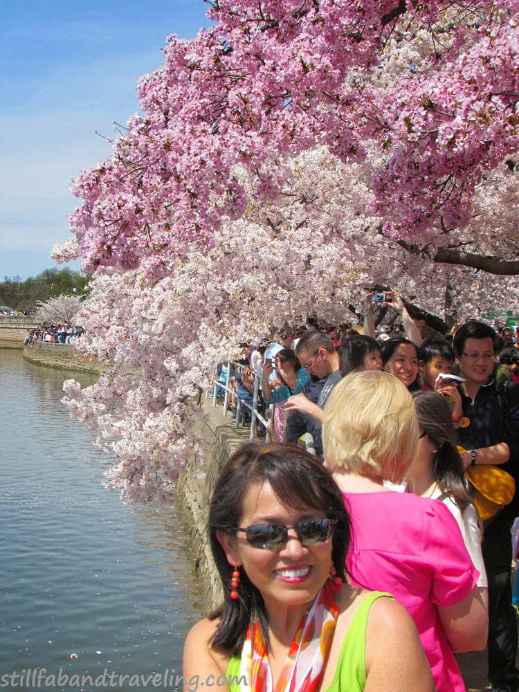 Picture of people during the Cherry Blossom festival
