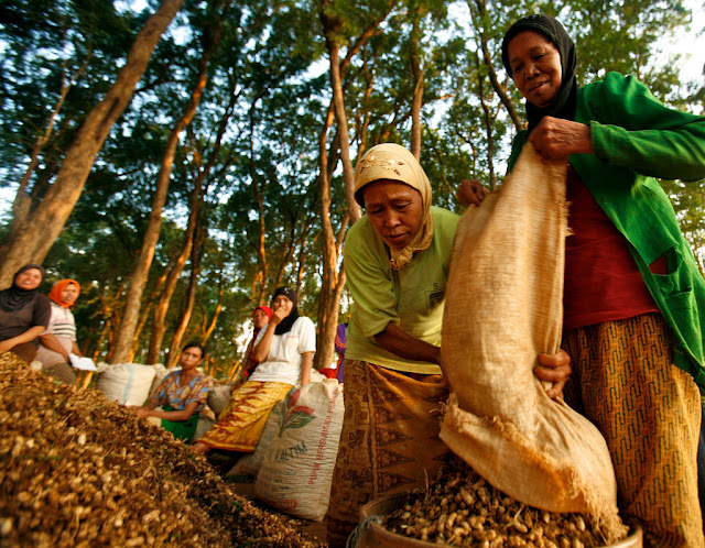 Women Working in Indonesian Teak Forest