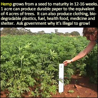 Hemp+Could+Free+Us+From+Oil,+Prevent+Def