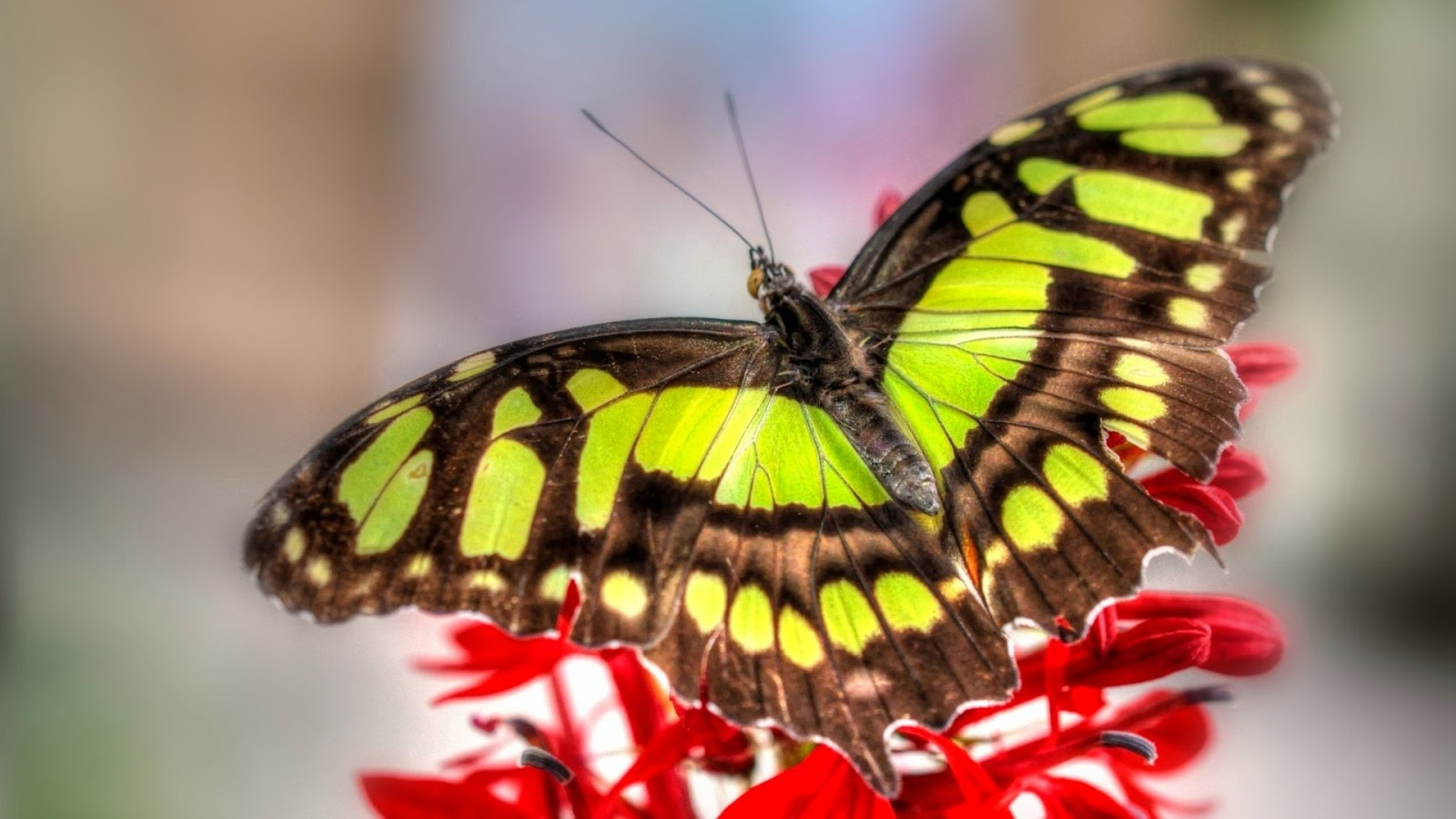 Colorful Butterfly HD desktop wallpaper High Definition