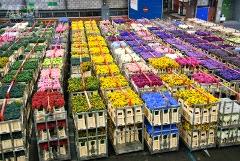 Virágtőzsde Aalsmeerben