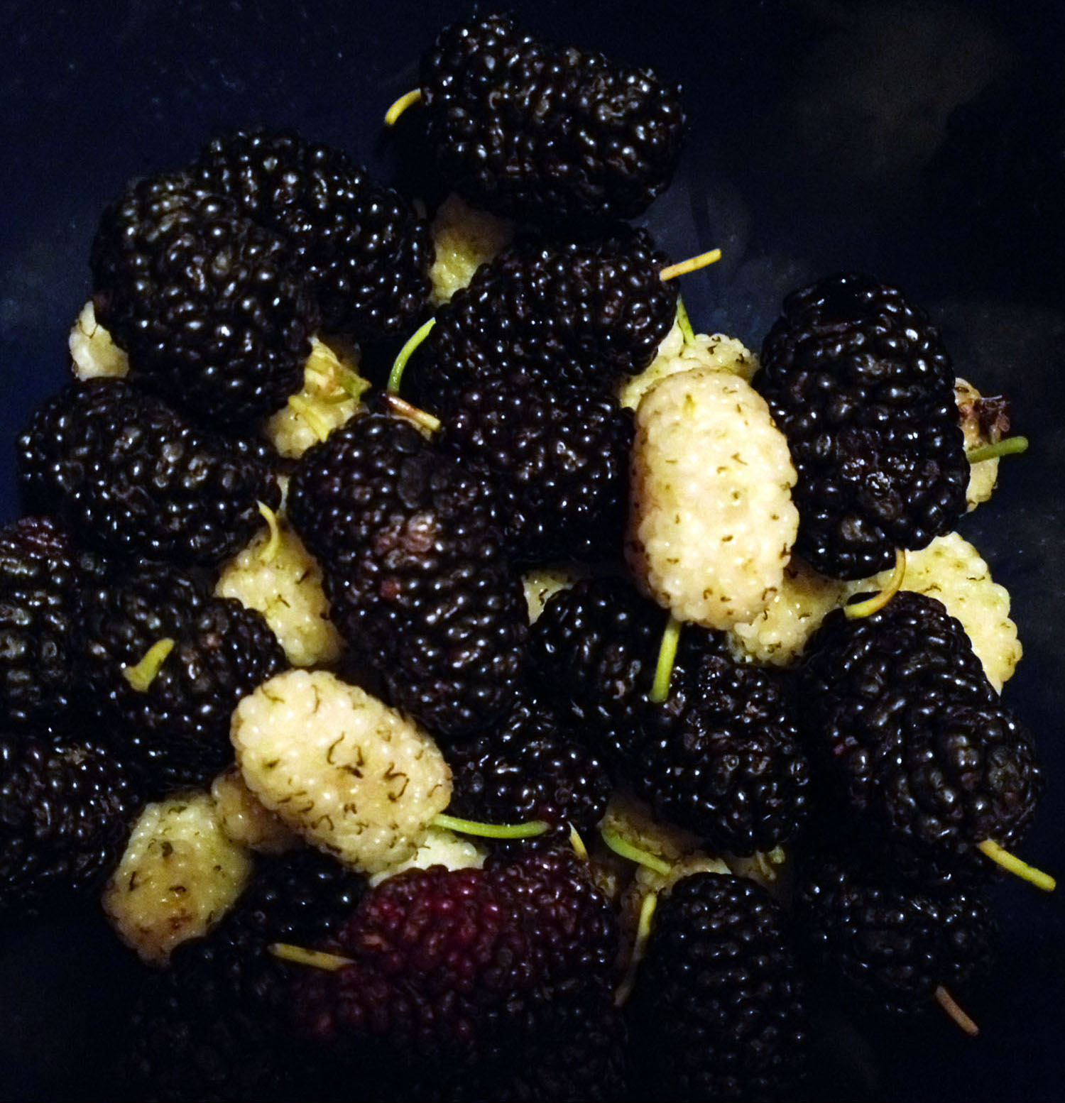 il magico gelso/ the magic mulberry