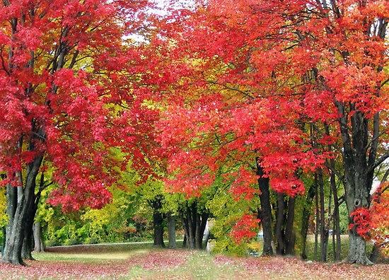 Gambar Pohon Musim Gugur Wallpaper Pemandangan Alam Indah