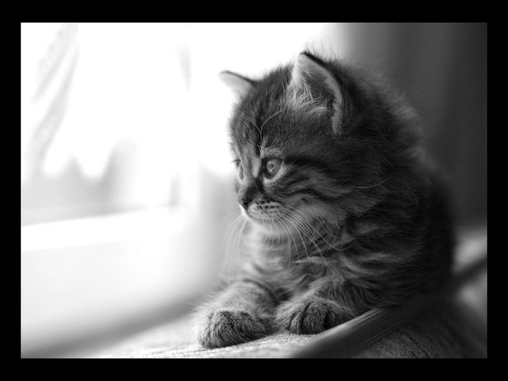 Baby Cat - Kitten || Top Wallpapers Download .blogspot.com