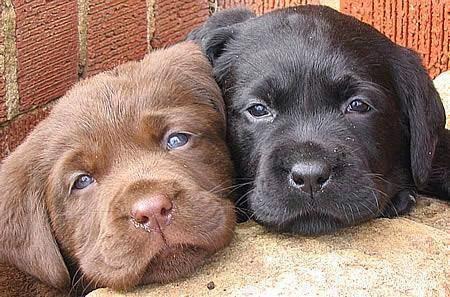 Resultado de imagen para perros contentos