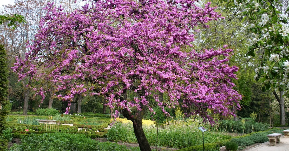 Arte y jardiner a dise o de jardines rbol del amor for Diseno de jardines 3d 7 0 keygen