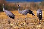 Aves Protegidas