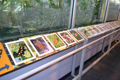Full sheet color photos helped visitors identify the butterflies present in the exhibition