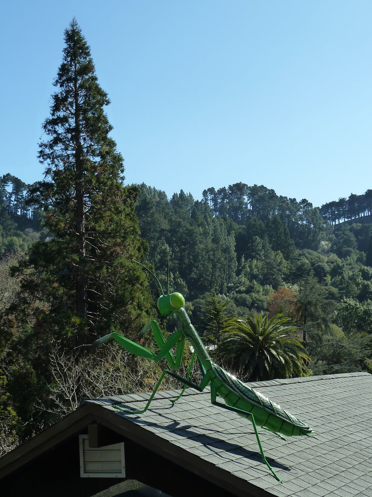 Biological Control At UCBG At Berkeley