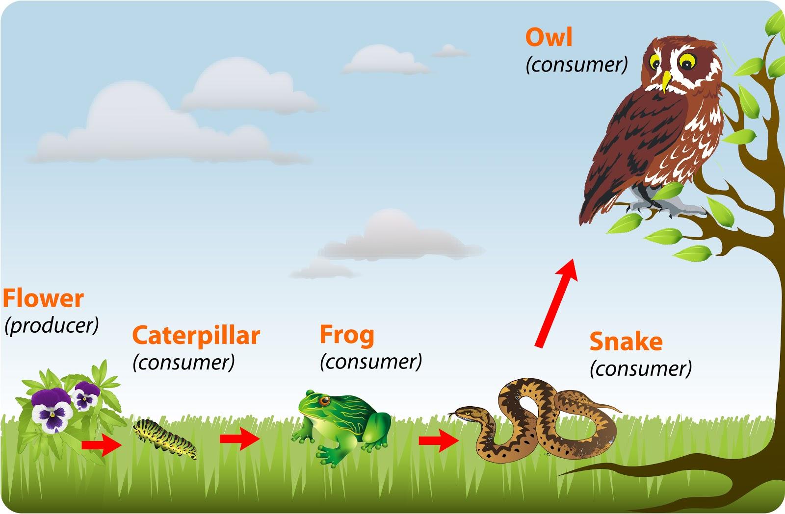 Food chain food web