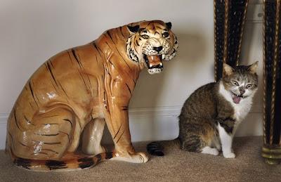 Pisica tigru