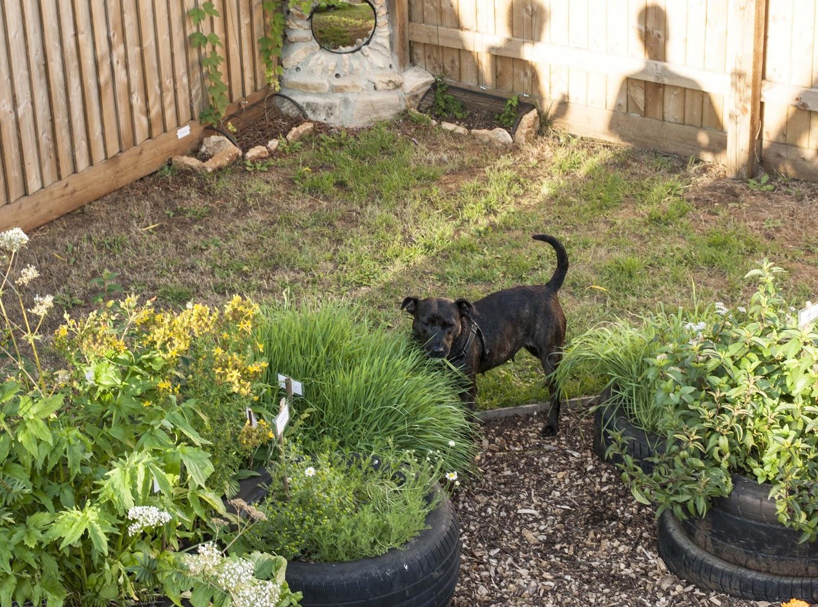 Caroline Ingraham: Sensory garden now open