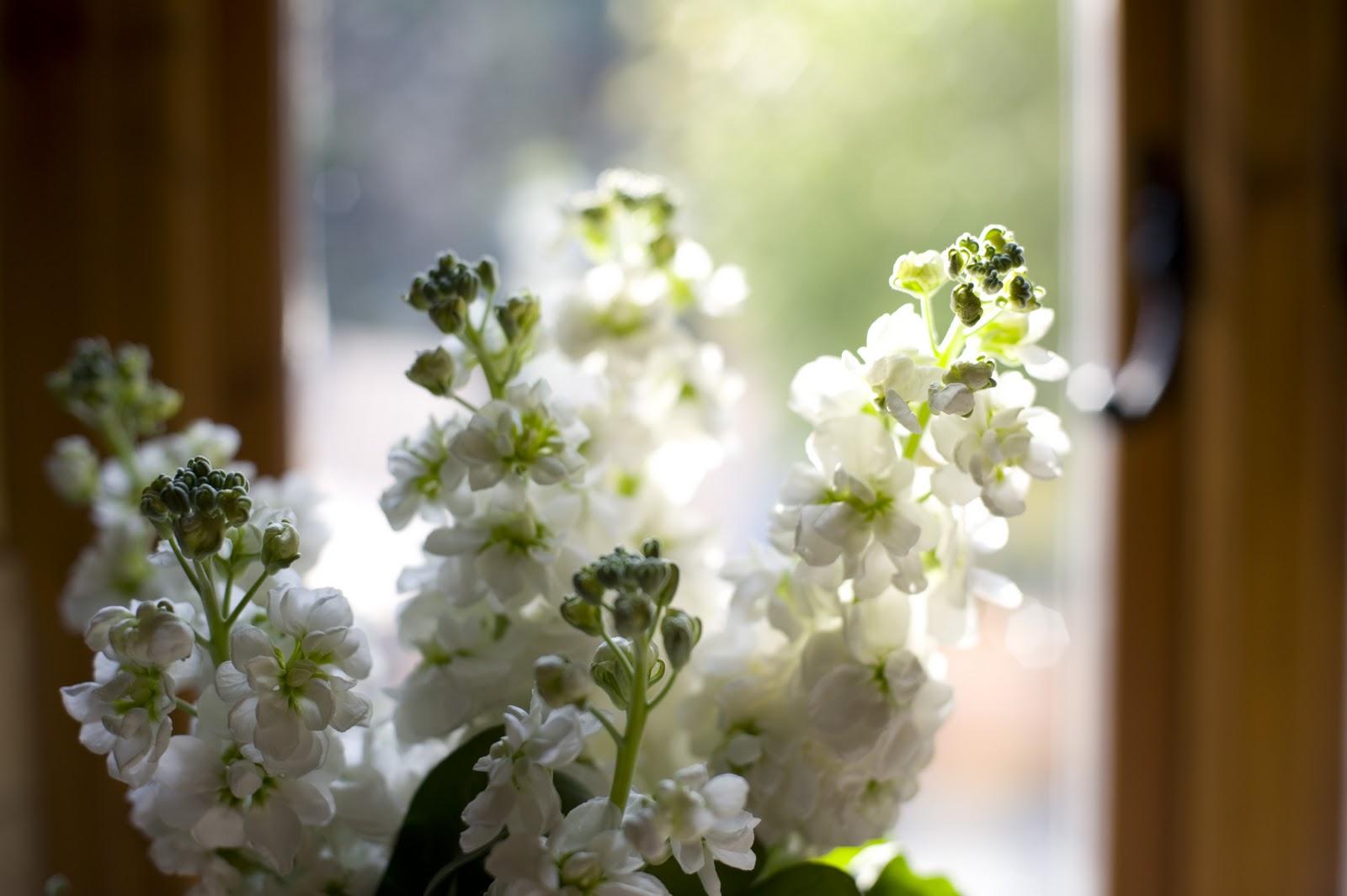 flowers for flower lovers stock flowers