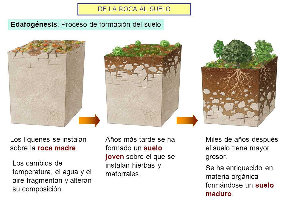 Fundamentos de la ciencia historia de la ciencia del suelo for Caracteristicas de los suelos