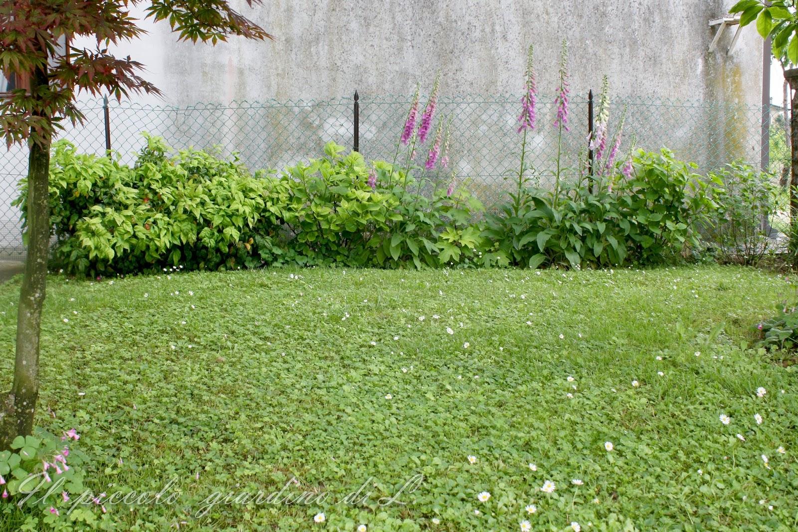 Il piccolo giardino di l nuovi lavori in giardino - Lavori in giardino ...