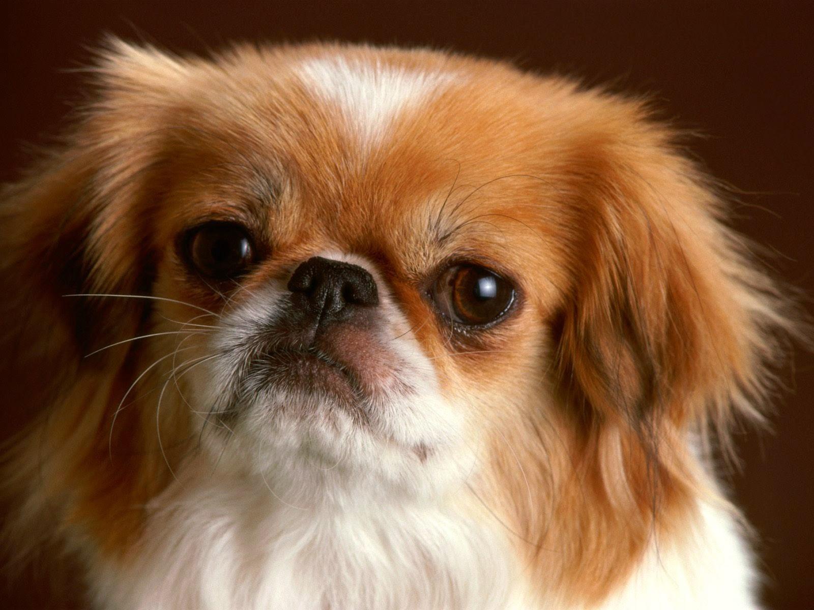 Animal Cute Dog Attitude HD Photos