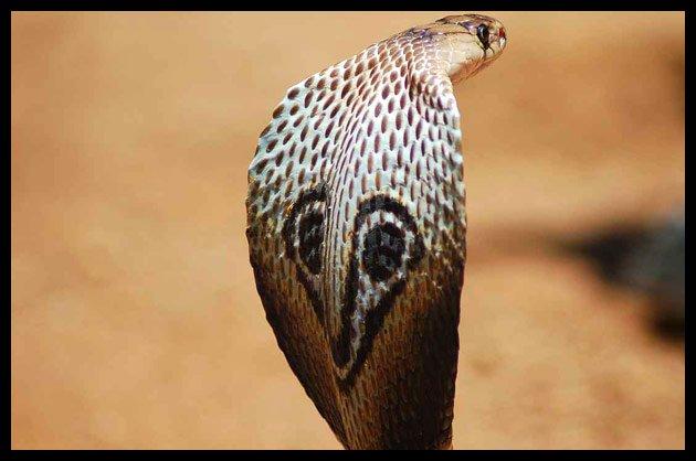 Durban  Tourism  Safari Park  Zulu  Reptiles