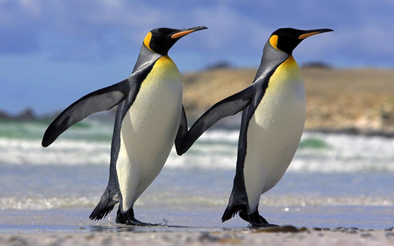 pinguinos_de_la_mano-1280x800.jpg