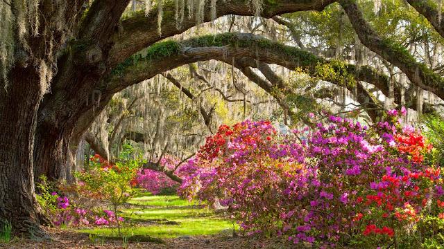 Imagenes de Jardines muy Coloridos