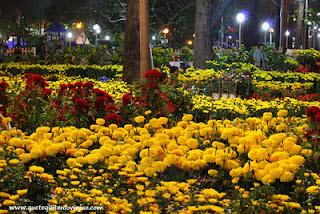 flores de Ho chi minh