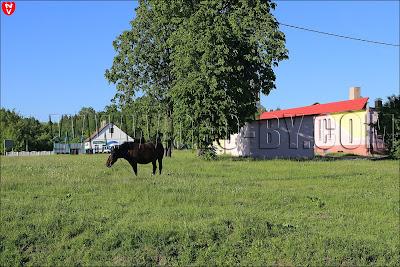Лошадь пасущаяся у магазина, у главной кревлянской площади