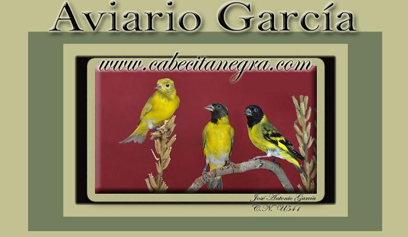 Carduelis Magellanica - Cabecita Negra