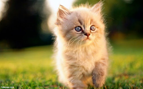 Image de mignon petit chaton - Image des mignon ...