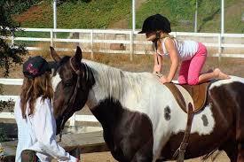 Doenças tratáveis com a Equoterapia e qual é o cavalo ideal